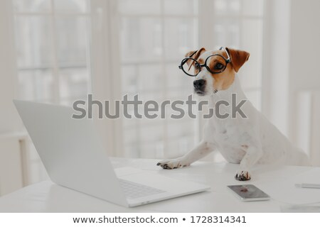 Foto ocupado cão grande óculos trabalhando Foto stock © vkstudio