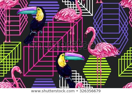 紫色 フラミンゴ 鳥 熱帯 エキゾチック 動物 ストックフォト © robuart