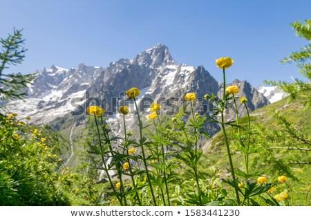 Grandes Jorasses - Mont Blanc Stock photo © Antonio-S