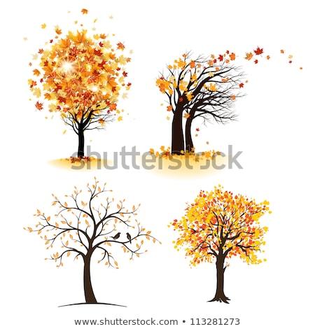 Foto stock: Abstrato · vetor · outono · árvore · ilustração · colorido