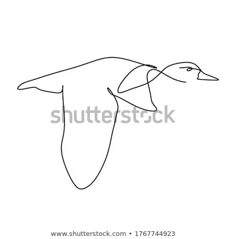 vektör · çizim · uçan · kuşlar · güneş · bahar - stok fotoğraf © basel101658