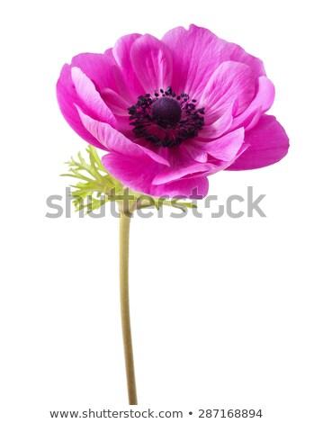 花 クローズアップ 美しい 春 自然 ストックフォト © dsmsoft