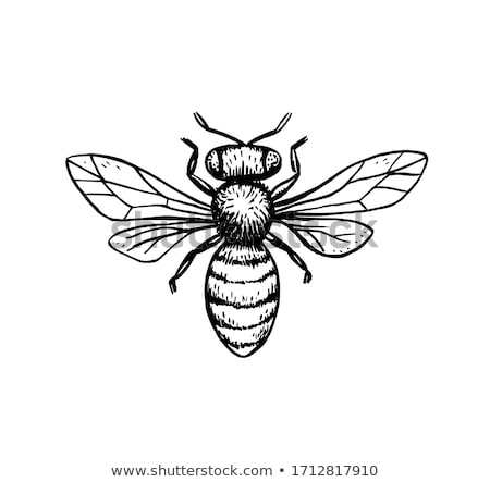 bee hornet graphic vector illustration stock photo © chromaco