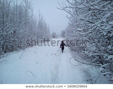 run boy in winter wood Stock photo © Paha_L