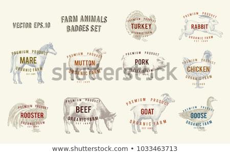 Dibujado a mano animales de granja ninos ninos caballo vaca Foto stock © kariiika