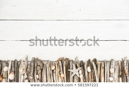 海 静物 シェル 流木 表示 ストックフォト © 808isgreat