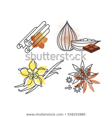 Chocolate vanilla flower and fruit of the cocoa Stock photo © lossik