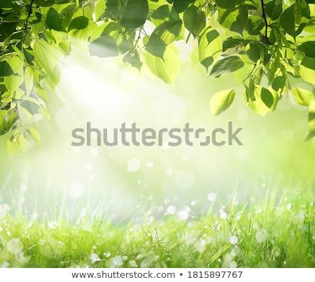 Nat gras druppels water ondiep natuur Stockfoto © Pietus