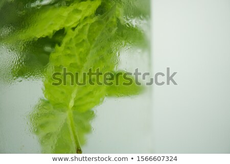 Ice cube and lettuce stock photo © Givaga