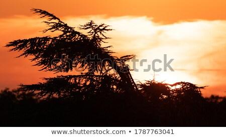 Háttérvilágítás nap iroda sötét fal terv Stock fotó © deyangeorgiev