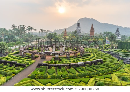 tropicali · giardino · botanico · Thailandia · sera · fiore · erba - foto d'archivio © ruslanomega