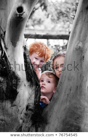 family of three hide tree stock photo © paha_l