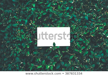 Business card in grass Stock photo © stevanovicigor