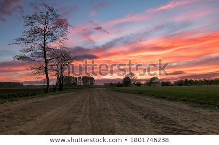 Beautiful Yellow Field and Green Forest under Dramatic Sky Stock photo © maxpro