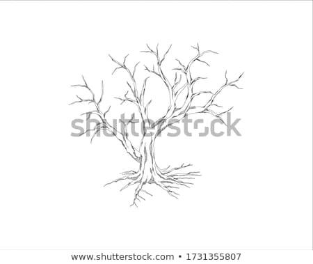 Desfolhada árvore solitário campo de grama nublado céu Foto stock © ajn