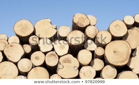 Cut Softwood Logs and Blue Sky Stock photo © tainasohlman