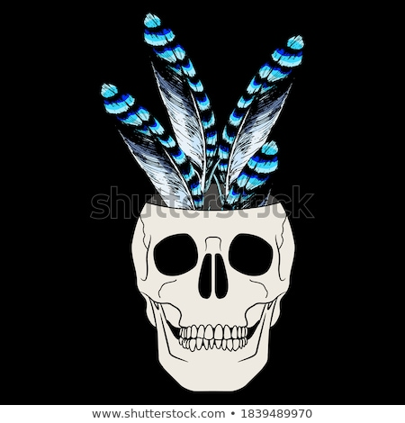 Dead Blue Jay Face Stock photo © ca2hill
