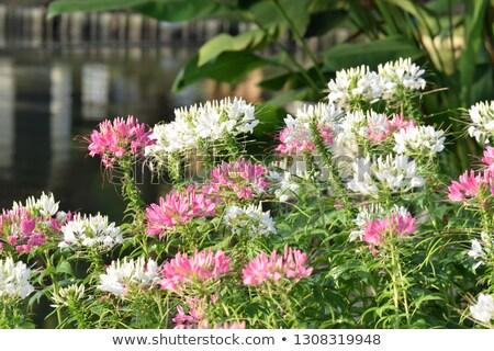 Stock fotó: Pók · virág · virágoskert · kék · ég · természet · szépség