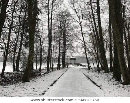 Silenzioso neve immagine coperto percorso strada Foto d'archivio © gophoto