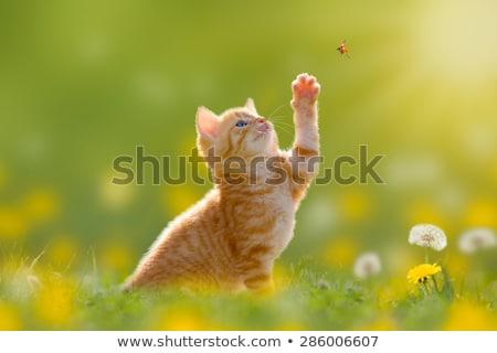 котенка · охота · Sweet · небольшой · весело · рот - Сток-фото © c-foto