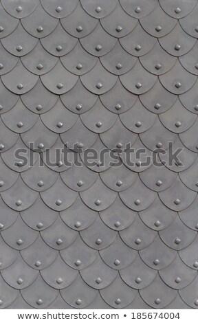 Metal armadura peces escala textura puerta Foto stock © silense