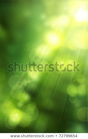 Stock photo: Abstract green forest defocused with sunbeam