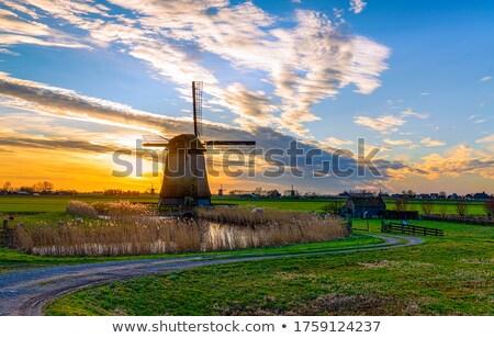 landscape with windmills Stock photo © Kayco