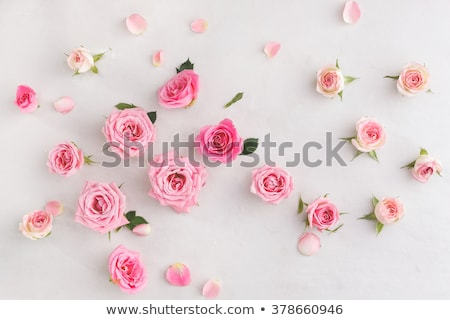 beautiful woman with rosebud stock photo © nejron