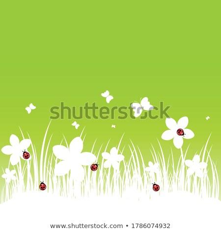 joaninha · folha · grama · verde · gotas · de · água · branco · grama - foto stock © anterovium