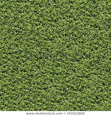 laurel bush surface seamless texture stock photo © tashatuvango