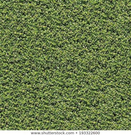 Babér bokor felület végtelenített textúra természet Stock fotó © tashatuvango
