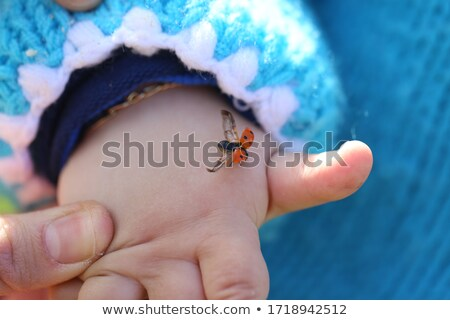 Stock photo: ladybird on hand