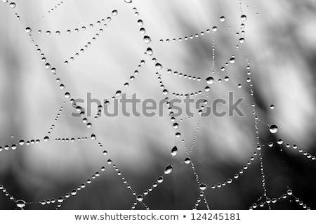 Közelkép kilátás pókok háló nedves textúra Stock fotó © michaklootwijk