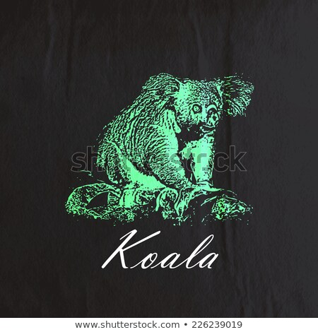 Stock photo: vector vintage illustration of a koala bear on the old wrinkled   paper texture