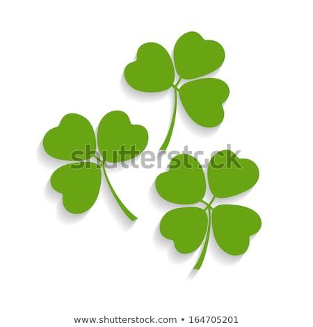 декоративный удачливый клевера лист зеленый дизайна Сток-фото © ulyankin