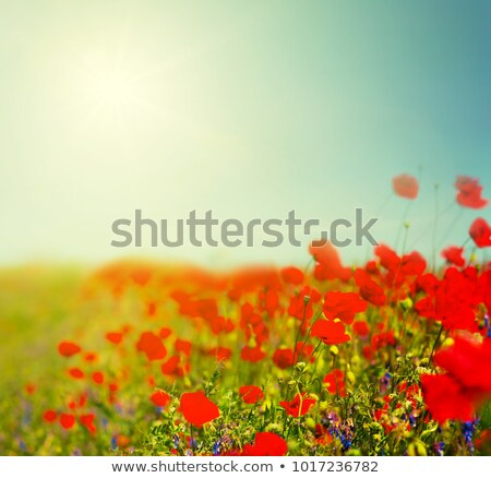 Gökyüzü yeşil ot harika yeşil çim bulutsuz Stok fotoğraf © tatiana3337