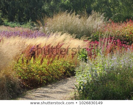 autumn landscape in summer garden stock photo © pilgrimego
