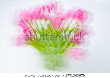 Frühling Tulpe abstrakten Eindruck rot Tulpen Stock foto © Anterovium