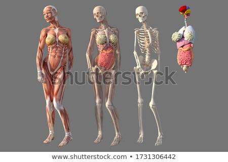 Csontváz sziluett áll ketrec vektor kép Stock fotó © Istanbul2009