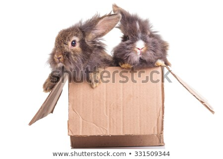 Side view of two cute lion head rabbit bunnys Stock photo © feedough