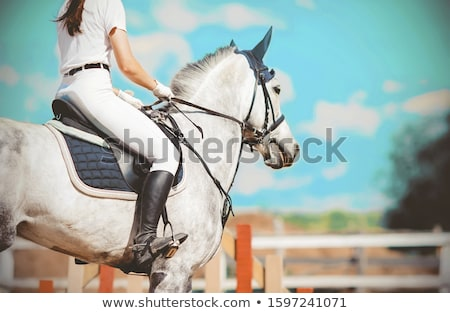 Female jockey on gray horse Stock photo © bluering