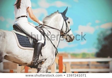 lovaglás · ló · illusztráció · nő · lány · sport - stock fotó © bluering