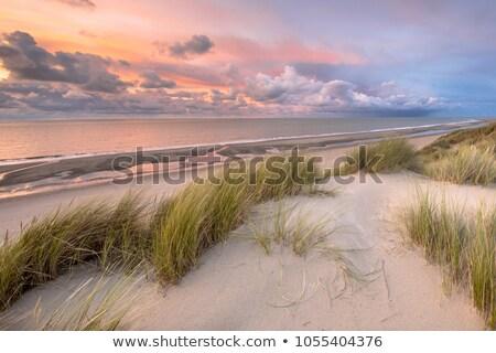 Holland part tájkép észak tenger fű Stock fotó © ivonnewierink
