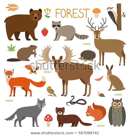 bonitinho · vetor · conjunto · animais · estilo · crianças - foto stock © curiosity