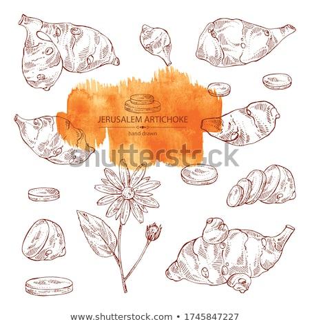 水彩画 コレクション エルサレム 塗料 食品 背景 ストックフォト © Sonya_illustrations