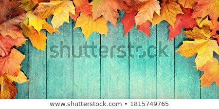 Autumn Foliage Fall Header Wood Stock photo © limbi007