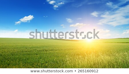 Zielone dziedzinie słońce niebo wiosną krajobraz Zdjęcia stock © rufous