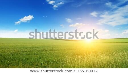 Green Field In Sun Beams Stock photo © Serg64