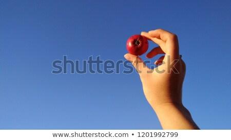 mão · vitela · isolado · branco - foto stock © digitalr
