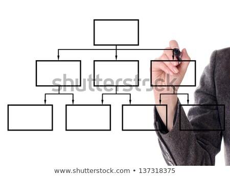 Drawing organization chart stock photo © sidewaysdesign